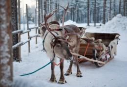 DAY C – Snowmobile safari to Sierijärvi (Min. 2 people)